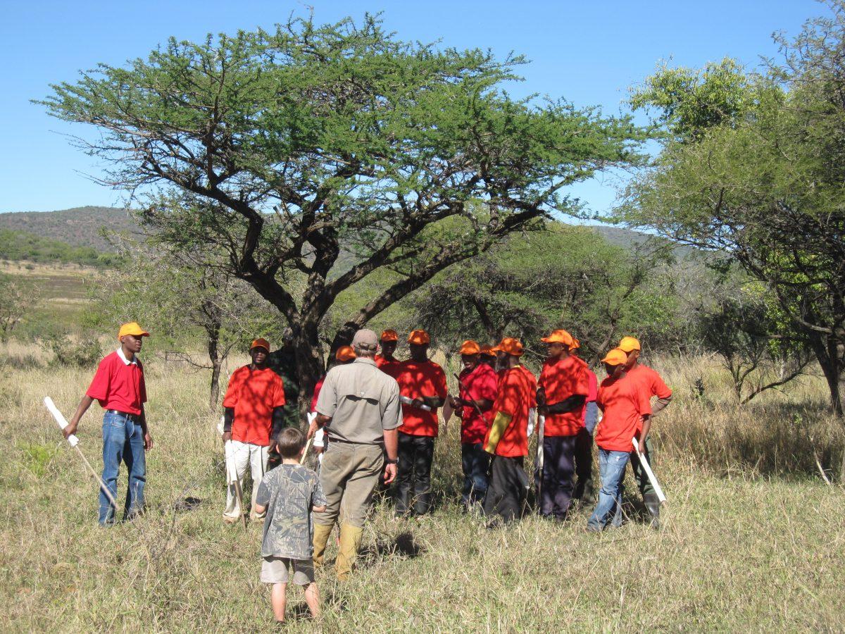 Umdende Hunting Safaris; Guineafowl